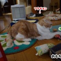 癒しのレオ君~♪(猫を季節に例えるなら~)