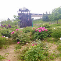 北海道旅行4日目(6月8日)