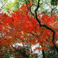 慈眼寺公園遊歩道の紅葉②・・・鹿児島の風景 鹿児島市