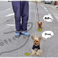 みんなでお散歩。