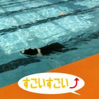 すごいプール!泳げるかな?~ドッグリゾートWoof