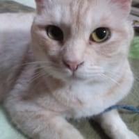 本日3月26日日曜日「猫の譲渡会」開催致します!!