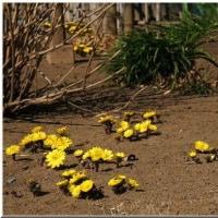 小さな春が来た~