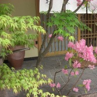 梅の花でランチ