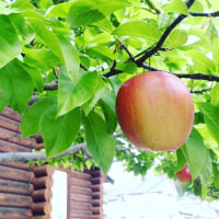 フェイクりんごの木