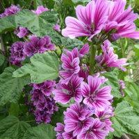 緑王殿(園芸名・セッコク)など今咲く花