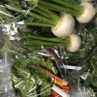 栃木の「ぬい農園」から野菜が届きました‼️