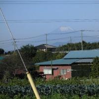 我が家の近くで冠雪の富士山が見えます