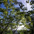 【K-5IIs】谷川岳2 DA15一本勝負