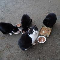 公園猫ちゃん 1229