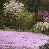 少しヒンヤリ 4月27日(木)晴れ時々曇り