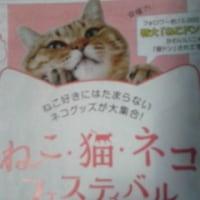 ねこネコ猫フェス