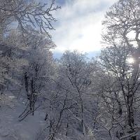 17年02月28日 白神岳1235m 蟶山コース 2人行 79回目