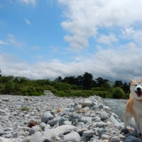 川で少し遊びました。