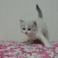 2月24日生まれの子猫達=^_^=