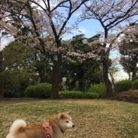 4月の萩子