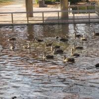 1月7日神宮東公園は4人だけ