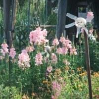 五月の散歩で見る花