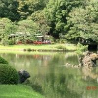 10月 7日(金) 水彩画サークルが六義園で写生会
