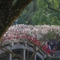 170227 昨日は太宰府梅の撮影会、モデルにカメラジジババが群がる!今日は久留米市総合美術展作品搬入と忙しい!
