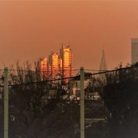 新宿高層ビル夕景