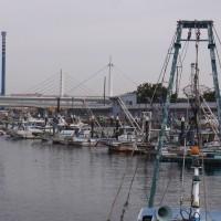 行列のできる漁港周辺を歩く