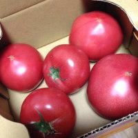 今年もトマト人