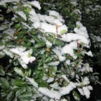 17-01-10 湿り雪