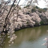 「桜」。「歳の長けた就学生」。
