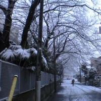 朝、雪が。