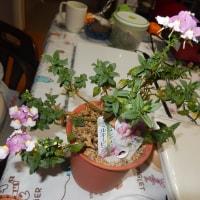 生き返ったピンクの花