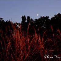 ★種差海岸~朝光に映える月情景~