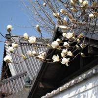 1266回 「 春彼岸 」 3/18・土曜(晴)