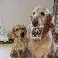 犬マリちゃんの~「酉年ねんど」♪