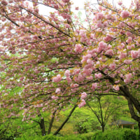 京都・花巡りⅠ