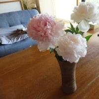 お花を頂きました!!