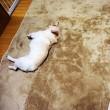 作業部屋の床のクッションフロアー*ビフォー*
