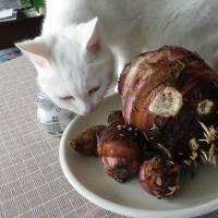 おさらい夏野菜(その5)