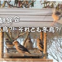 毎度おなじみのシメですが・・・夏鳥か冬鳥かと