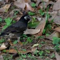 里山の野鳥たち続く