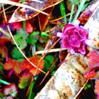 3月27日、花巻自宅の雑草畑は少し寒さの後戻り、早春の雨に打たれ