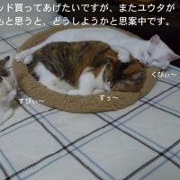 猫ベッドが人気!