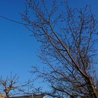 昨日よりも青い空