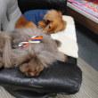 U^ェ^U犬のしつけ 犬の幼稚園 Buddy Dogのようす 2014/02/21U^ェ^U