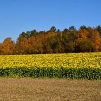 土に還る秋