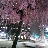 街なかの夜桜