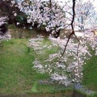 桜、2017~その2 「月と夜桜」