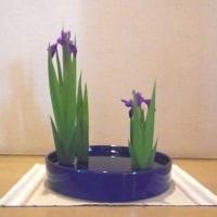 カキツバタ(春)