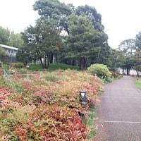 東京(六本木)ミッドタウン緑地