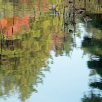 日本庭園の秋(Ⅳ)